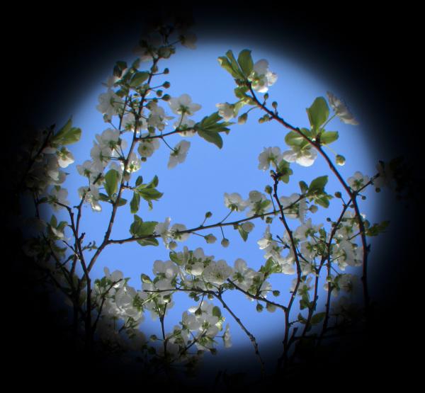 Primavera 6 - 7