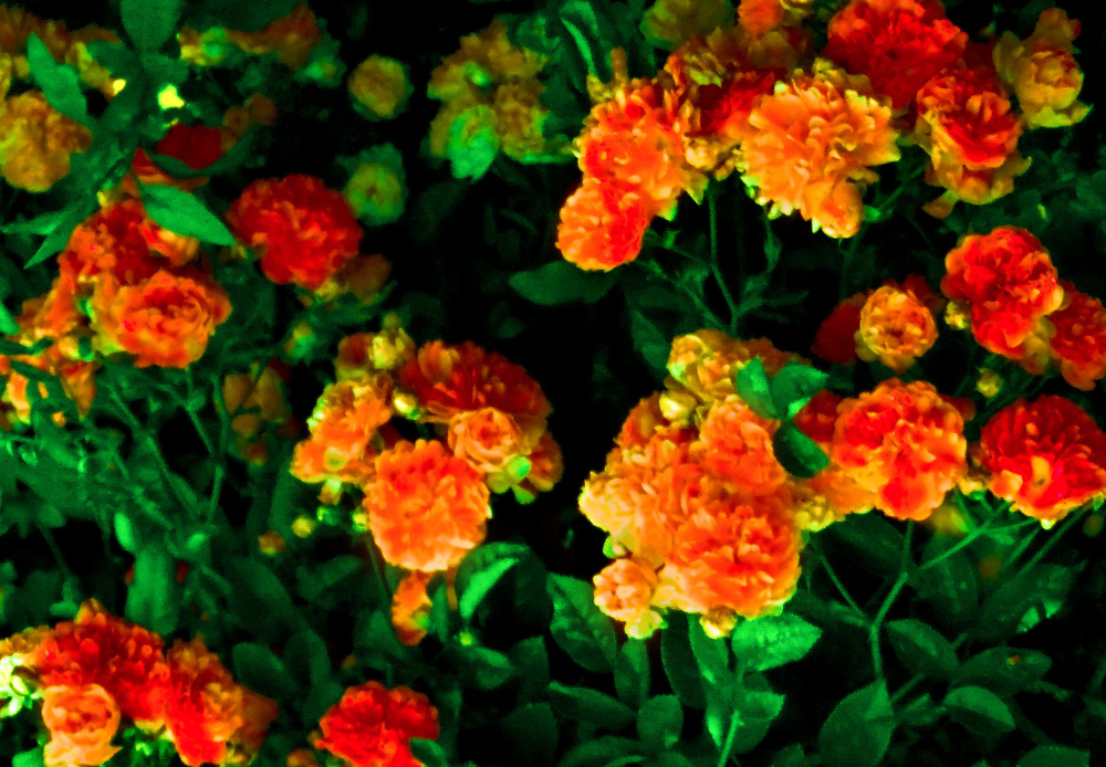 Flores 1 - 3