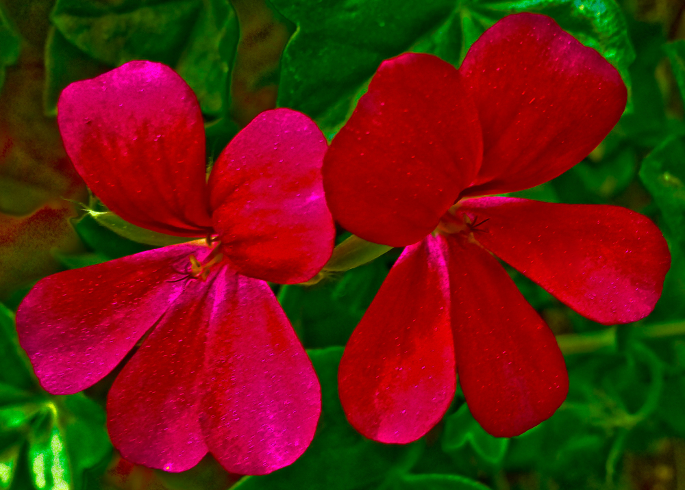 Flores 1 - 4