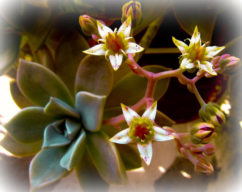 Flores 1 - 5