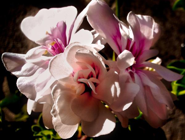 Flores 3 - 5