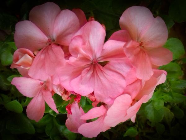 Flores 2 - 3