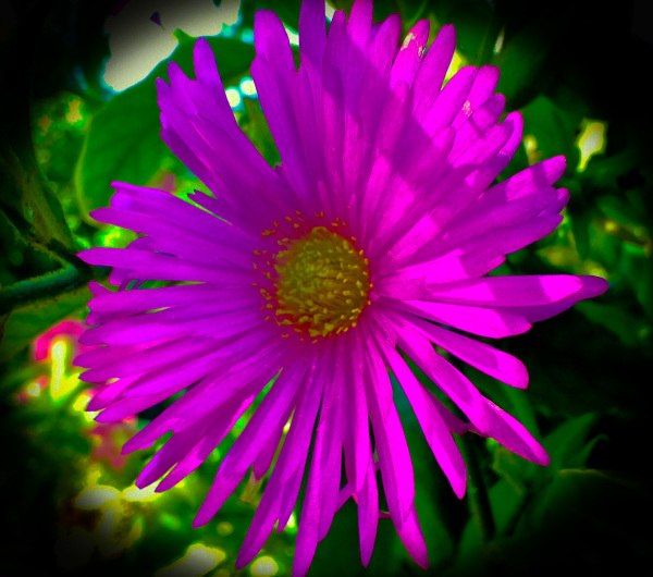 Flores 1 - 6