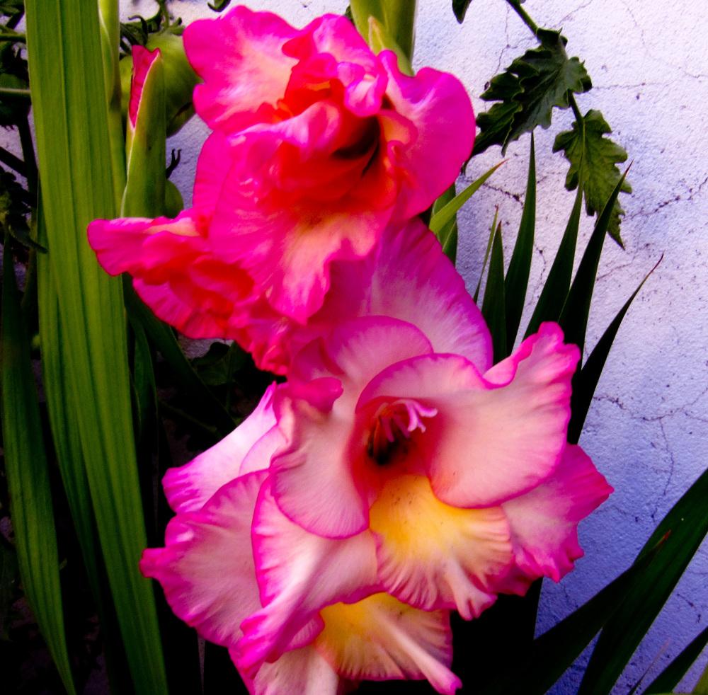 Flores 2 - 6