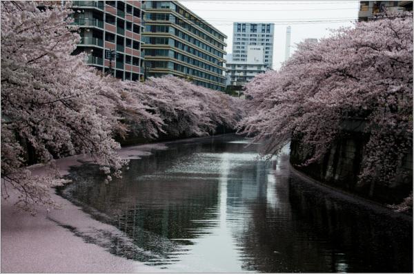 At Meguro River
