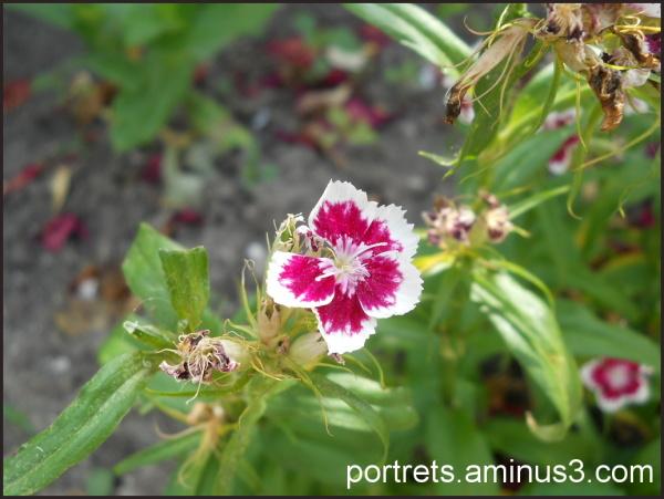 Dried plants -1