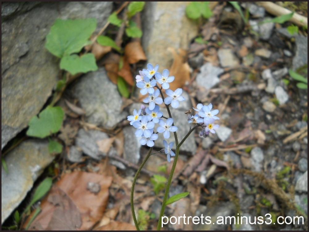 Blue 2/2