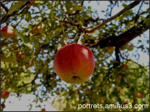 An apple 1/2