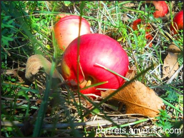 An apple 2/2