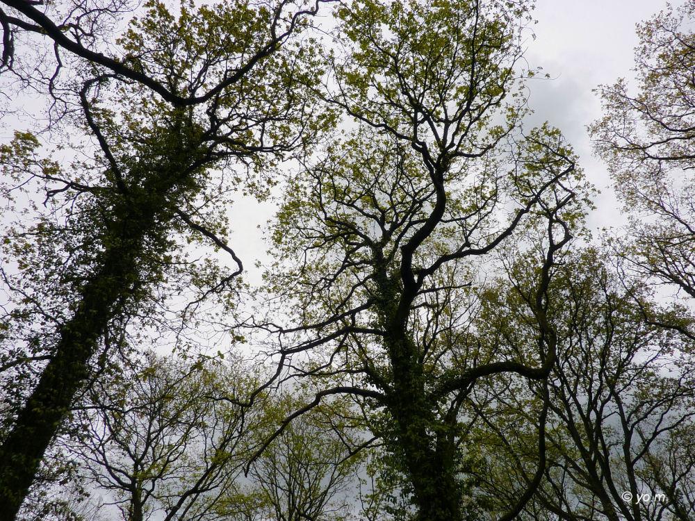Prom'nons-nous dans les bois... # 2