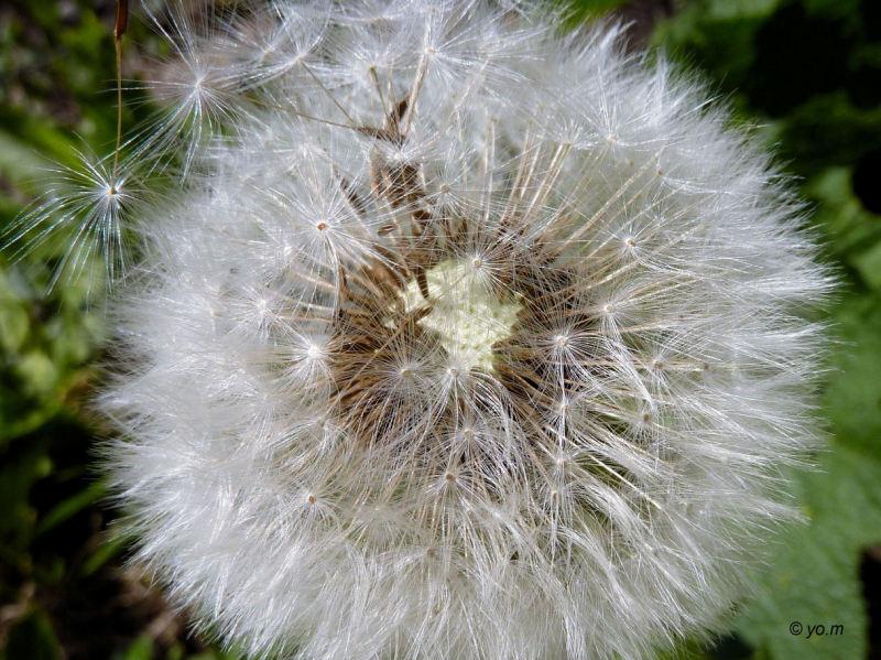Fleurs des champs  # 3