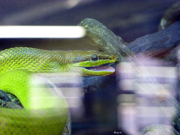 """""""La gloire est un serpent..."""