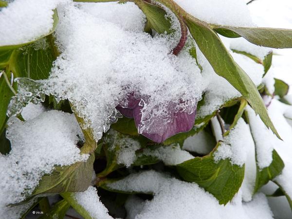 L'hiver s'incruste
