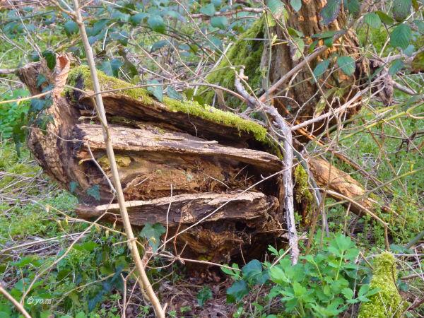 L'arbre mort # 2