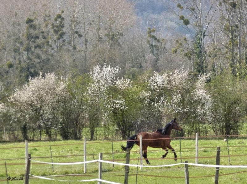 Le printemps arrive...  au galop