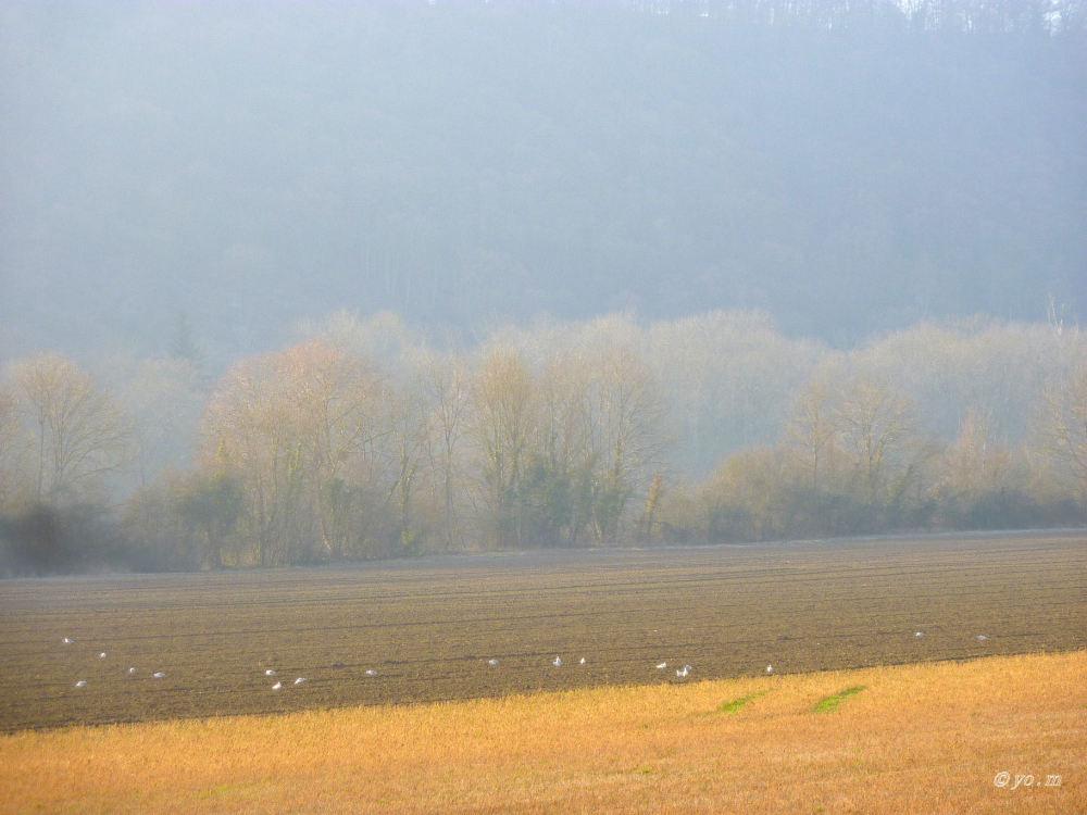 Quand le brouillard se dissipe