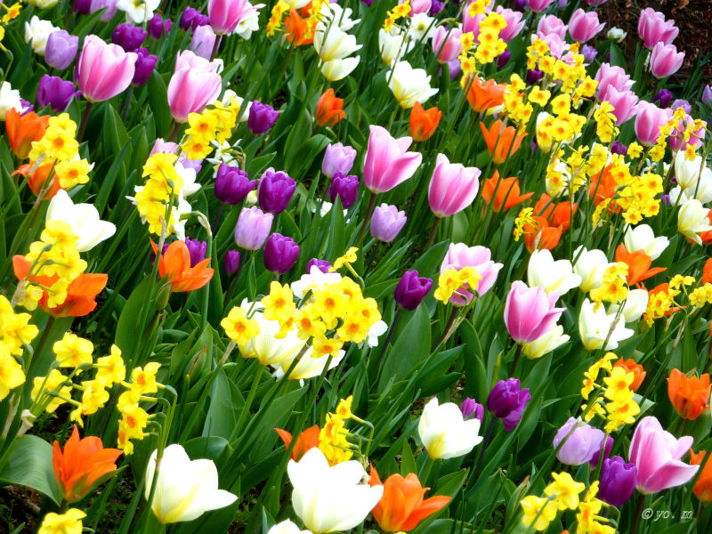 Tapis multicolore