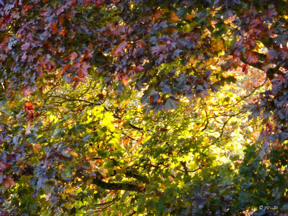 Couleurs d'automne  # 1