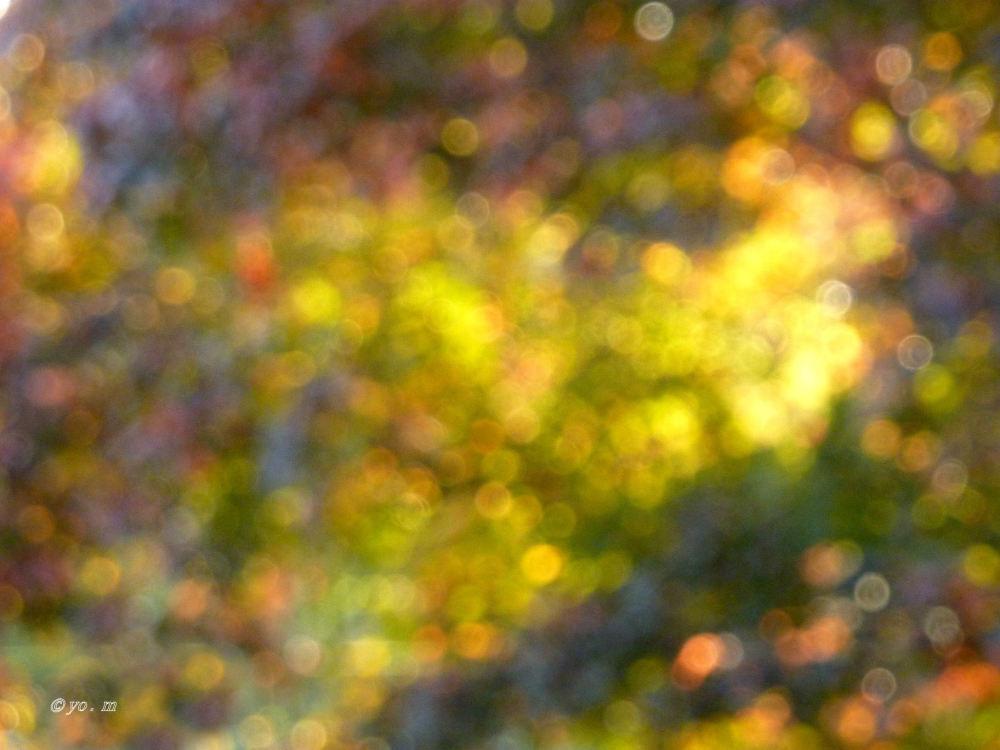 Couleurs d'automne  # 2