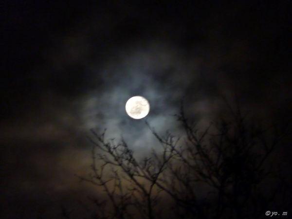 L'œil de la nuit