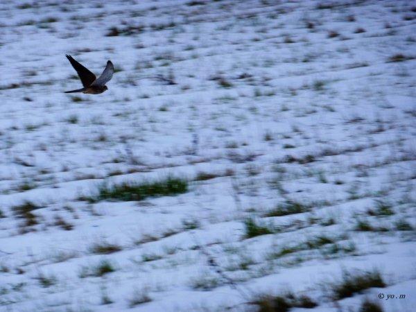 Un oiseau passe  # 2