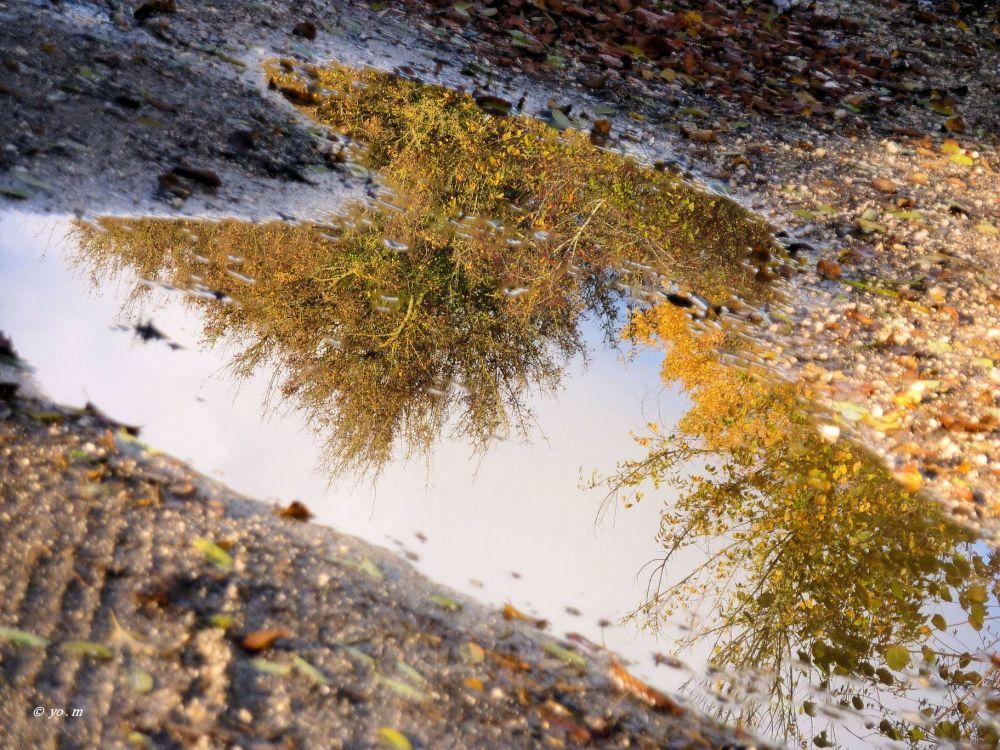 L'automne dans les flaques
