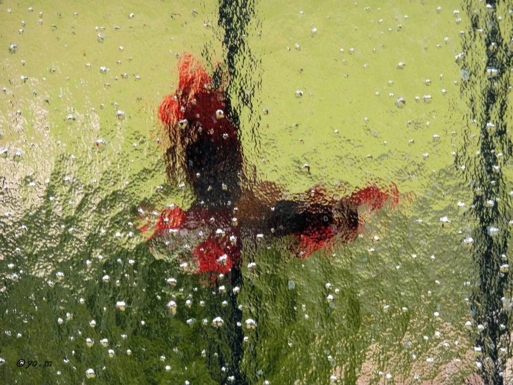 Papillon sous la pluie