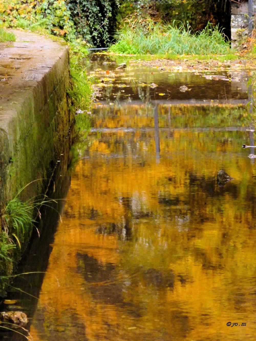 Derniers reflets d'automne  # 1
