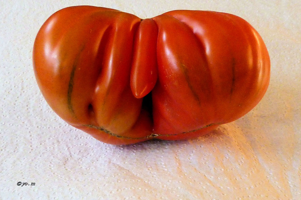 Anatomie d'une tomate