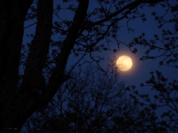 Lune rose