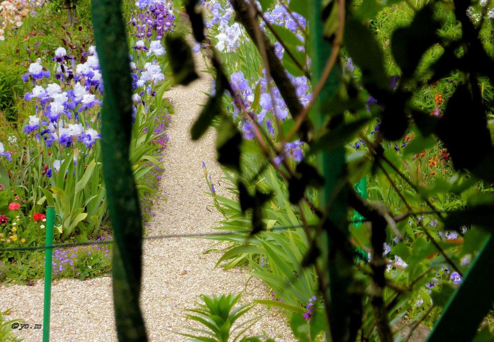 Jardin confiné  # 2