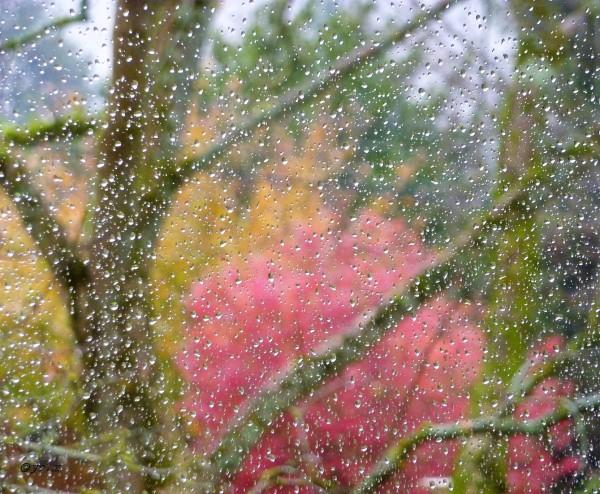 Un dimanche pluvieux