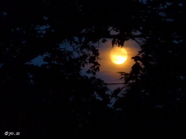 L 'œil de la nuit  # 2