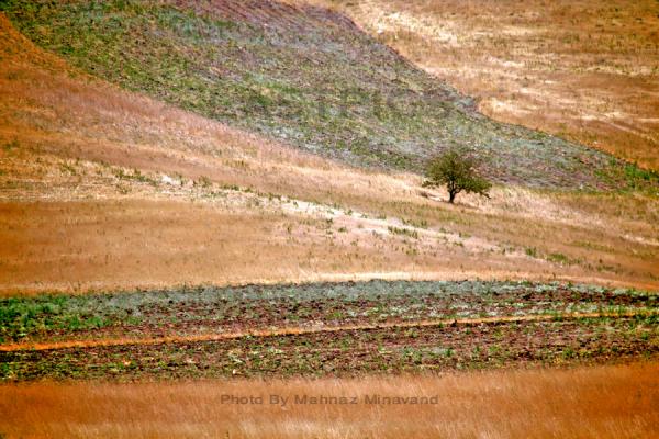 Single tree / In Qazvin - rasht Exp.