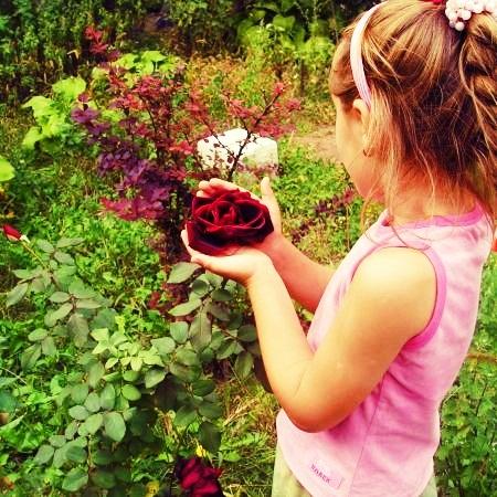 Garden woth flowers