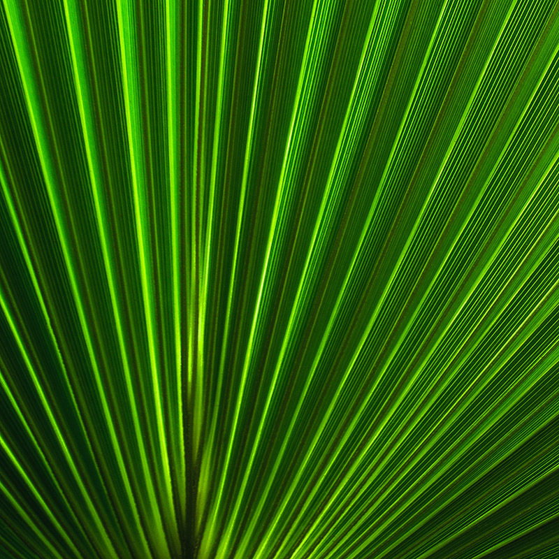 Light Lines
