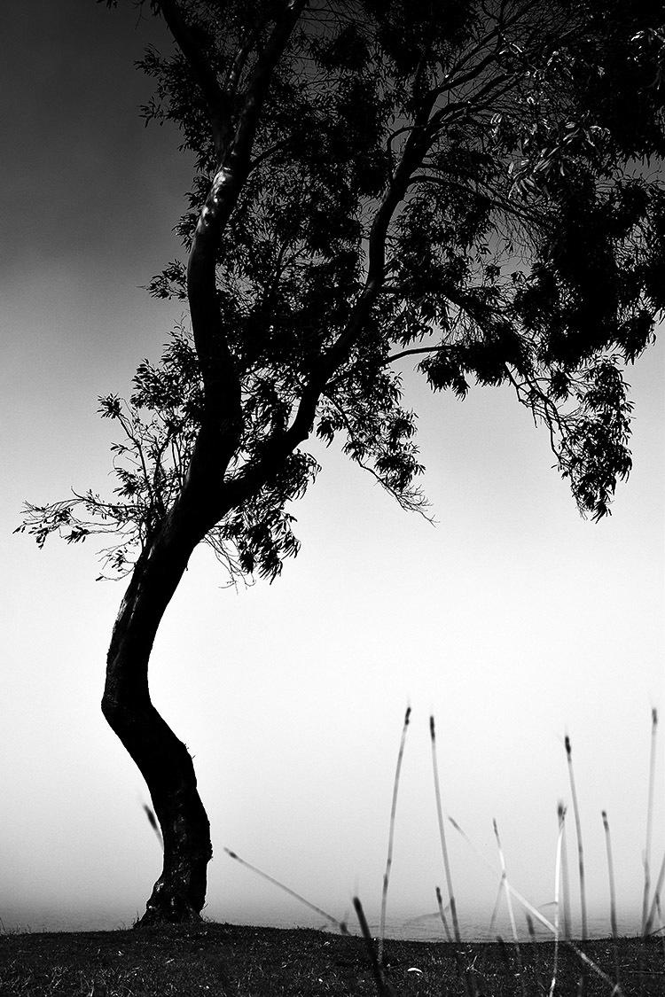 BW Chalus Tree CloseUp