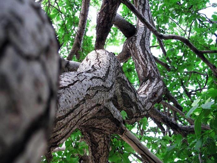 tree, dancing, standing