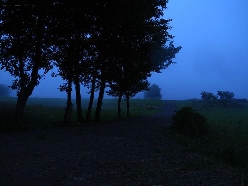 dark blue, tree, fog, foggy plain, brume