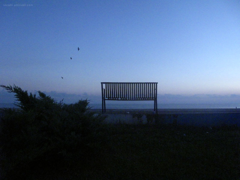 bench faces the sea, loneliness, Seagulls flying