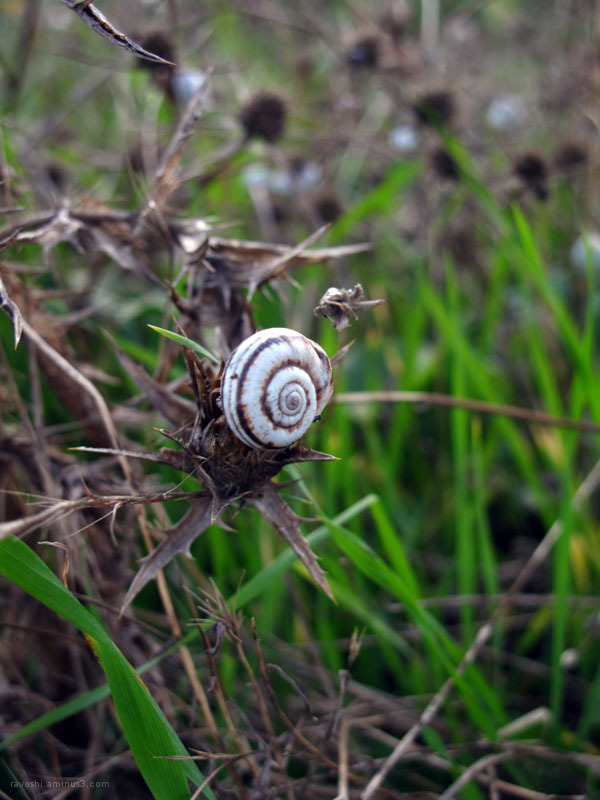 snail, prickle, nature
