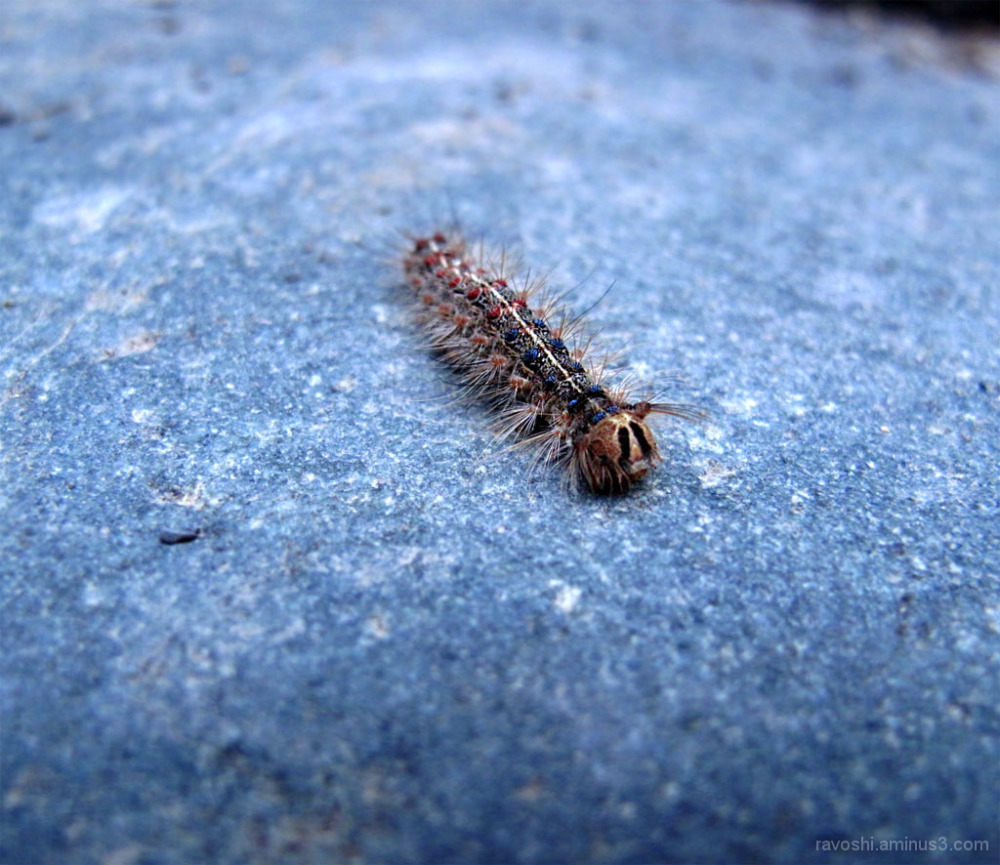 millipede, multiped, animal, insect, worm, dot