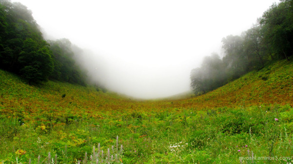 Virginal nature, foggy valley, HD wide