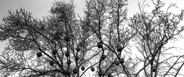 shelters, homes, tree, B/W