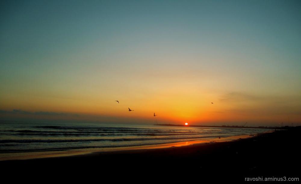 sunrise, sea, dark, birds, fly
