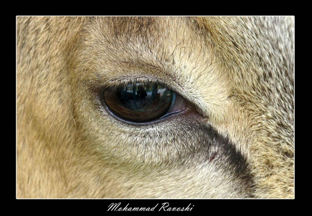 deer, prison, eye