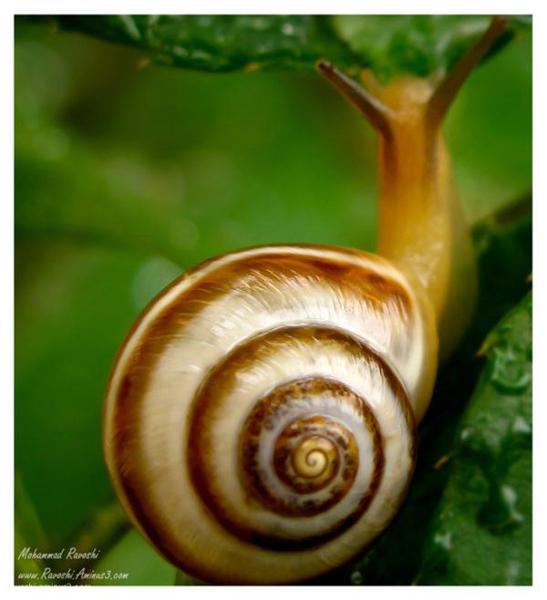 Snail, leaf, nature