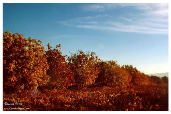 nature, fall, autumn, farm