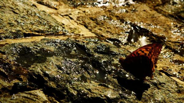 butterfly, rock