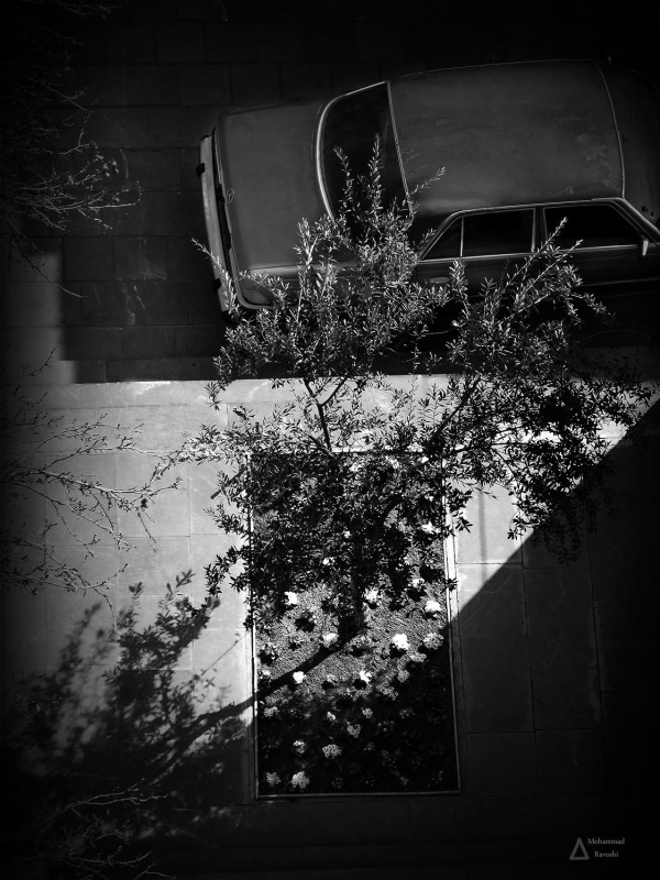 car, light, shadow, tree, flower